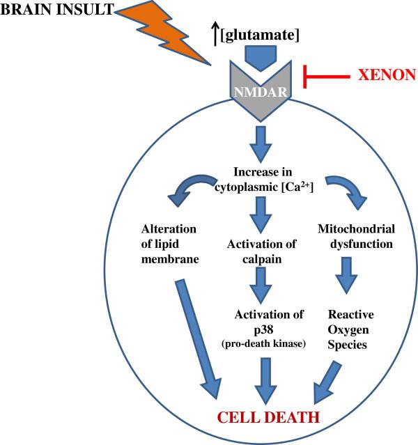 Xenon's Neuroprotection Use